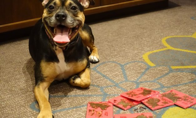 Kimpton NYC Marks Year of the Dog With Special Treats